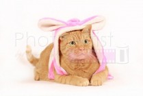 brown cat in bunny costume